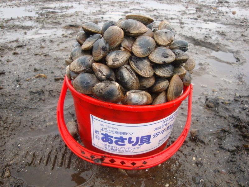 北海道内でアサリ・シジミ・ホッキの潮干狩りがてきるスポット一覧