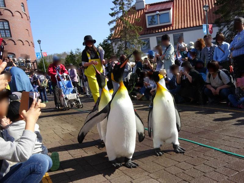 登別マリンパークニクスペンギンパレード