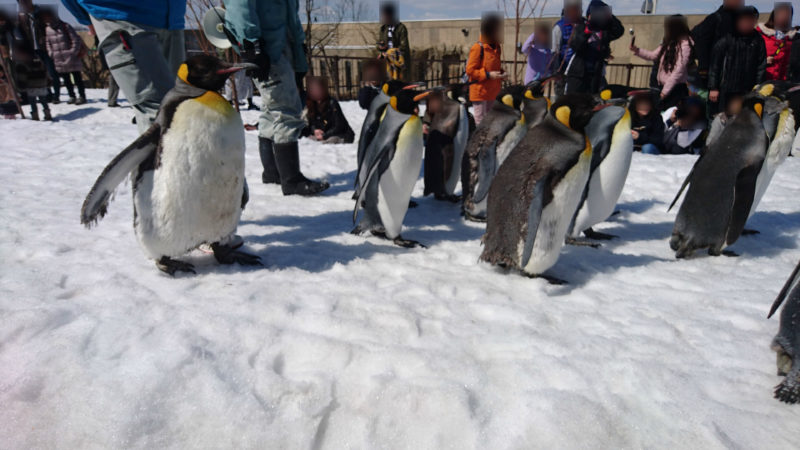 ペンギンと同じ目線