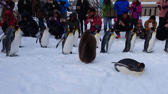 ペンギンのヒナ