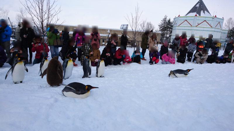 腹ばいで滑り始めるペンギン