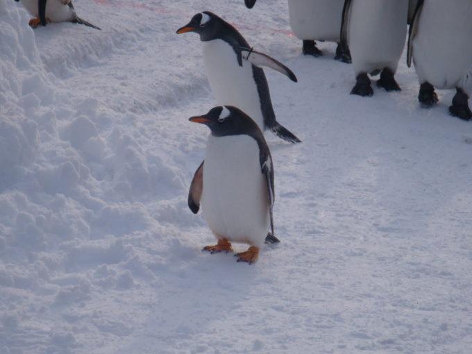 疲れたのでちょっと休憩中のペンギン