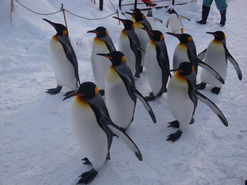 ペンギンの雪中散歩がある北海道の動物園・水族館