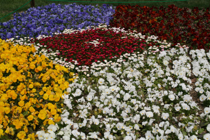 北海道の花畑が見れるライブカメラ一覧