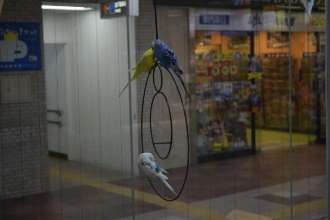 札幌駅・大通公園周辺にある癒やしの鳥スポット