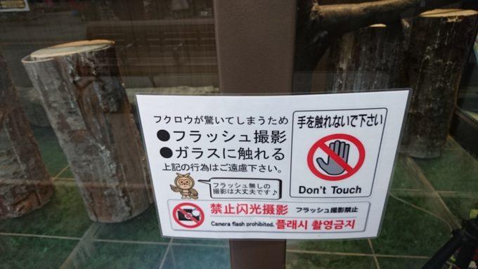 カメラ撮影はOKですが、フラッシュ撮影は禁止