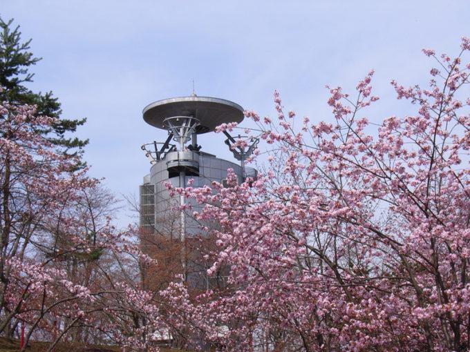 東明公園の桜