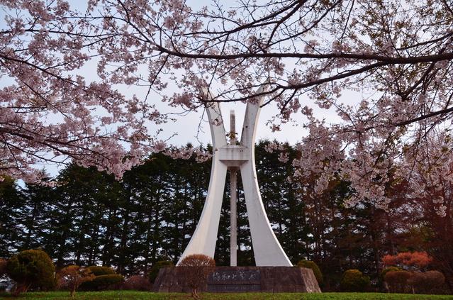さらんべ公園の桜