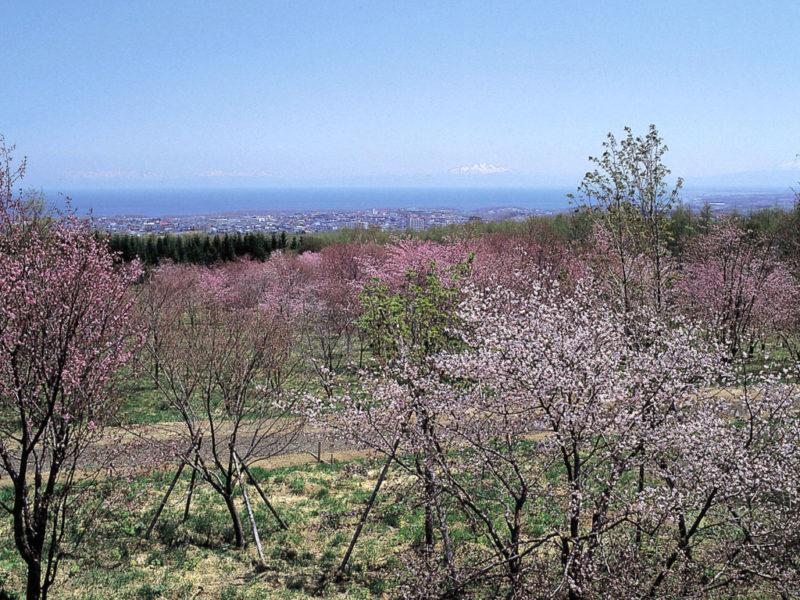 天都山桜公園