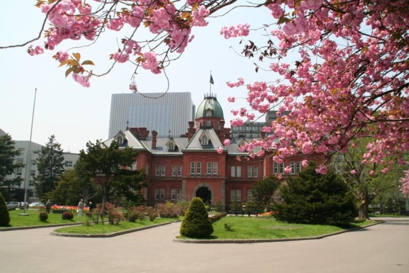 北海道庁旧本庁舎(赤れんが庁舎)の桜