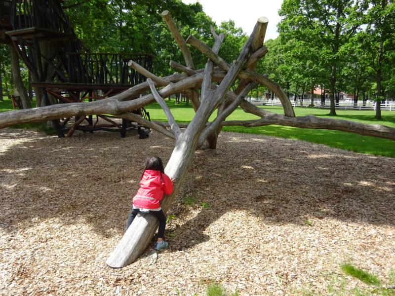 木を重ねたジム