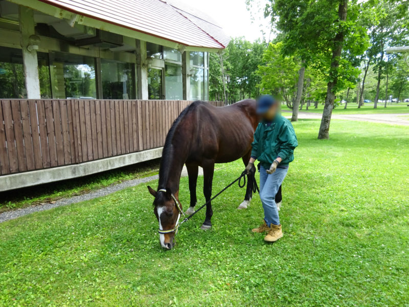 厩舎から散歩する馬の姿