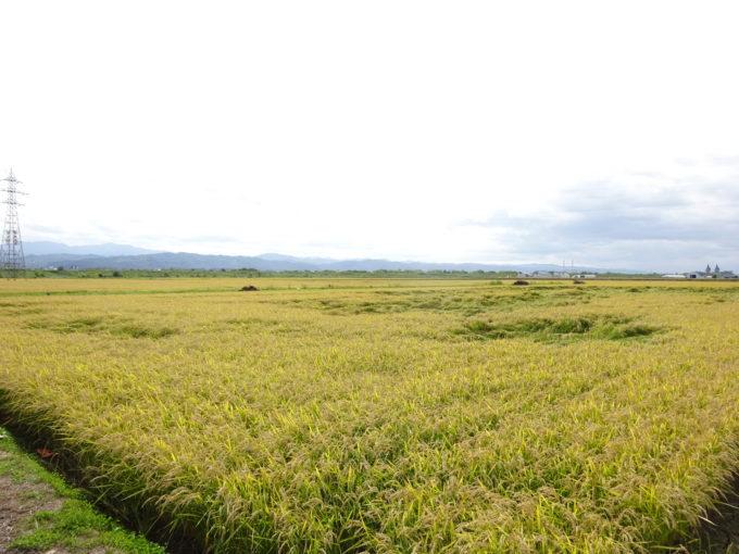 広大な白石農園さんの敷地