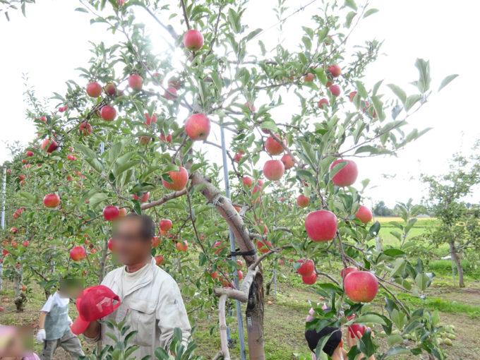 江部乙(えべおつ)産のリンゴについてのお話