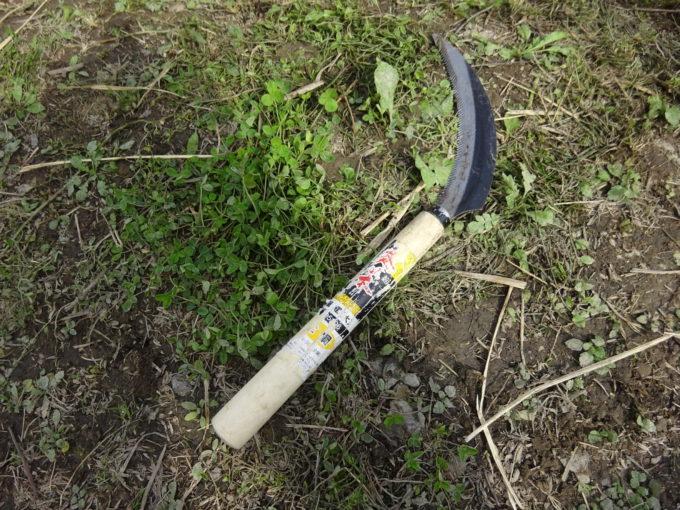 今回稲刈りで使用する鎌