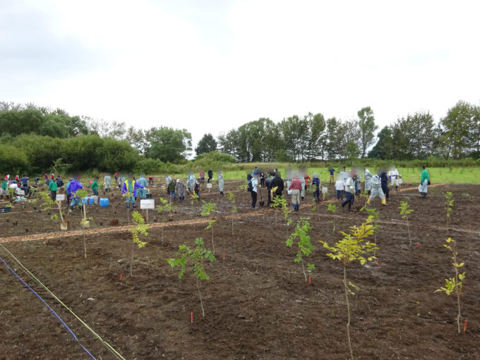 みんなの力で2,400平方メートルの面積に1,270本が植樹されました。