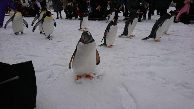 登別マリンパークニクスペンギン