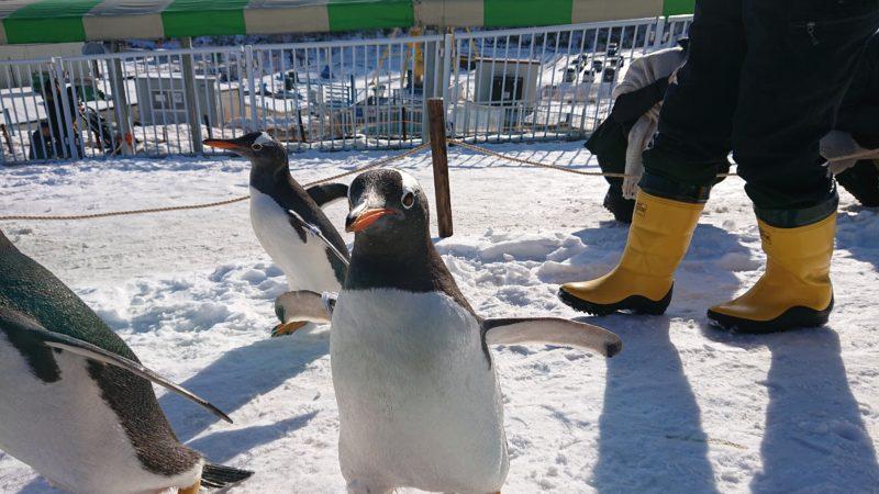 近くにペンギンがやってきます