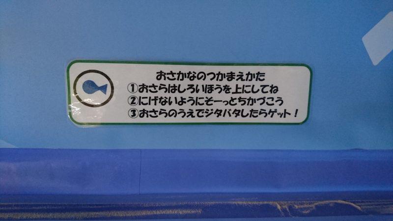 魚の捕まえ方の説明