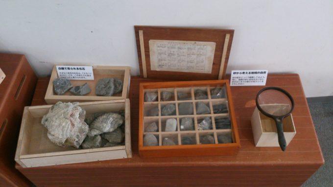 白糠の化石