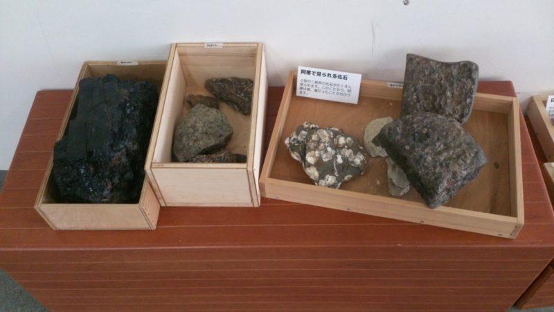阿寒の化石