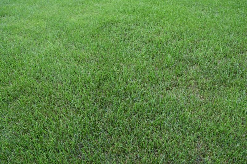 芝が綺麗に整備