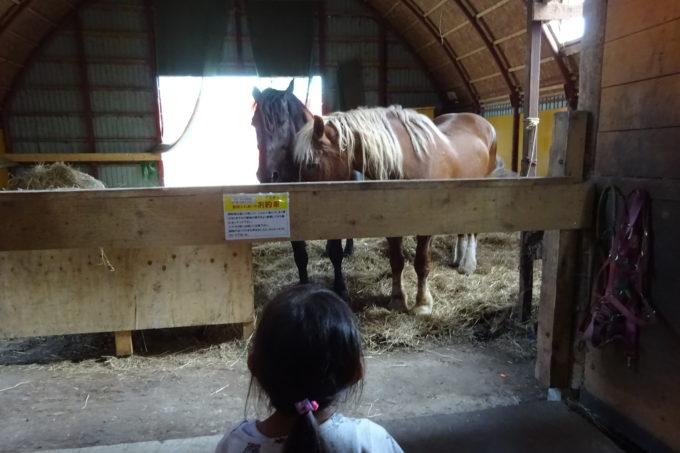 間近で見る馬の迫力