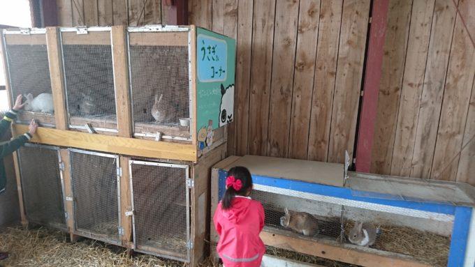ウサギのえさやりコーナー