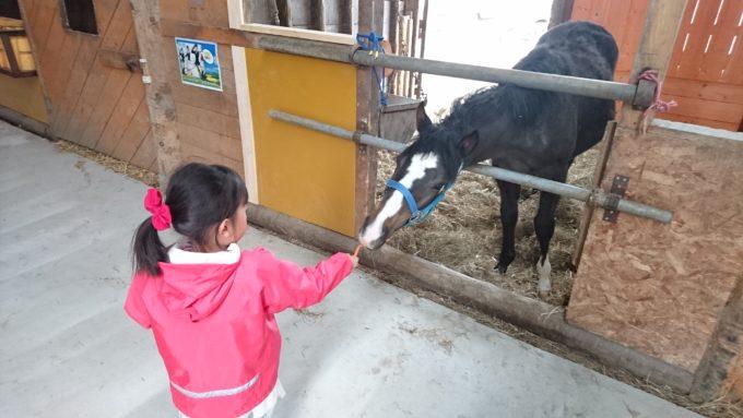 厩舎内の馬にも人参をあげることができます
