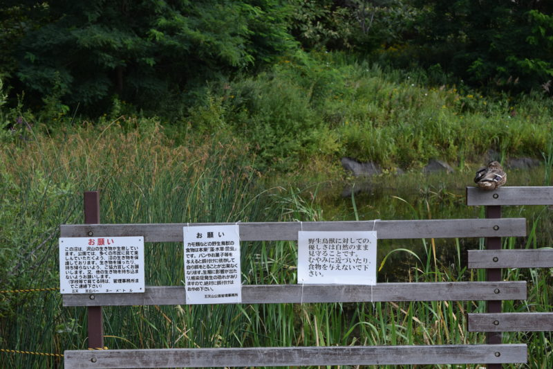 沼についての注意書き