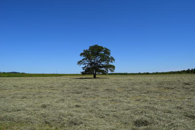 撮影スポットからのはるにれの木