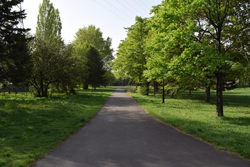 公園内の散策路