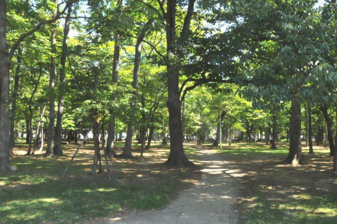 ひのまる公園散策路