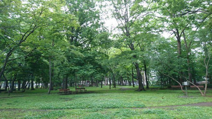 公園の中央付近