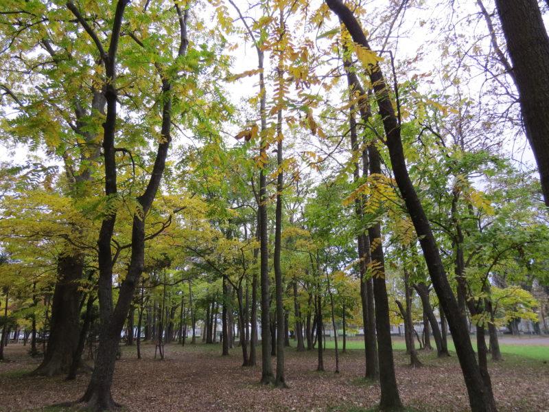 10月中旬のひのまる公園散策路