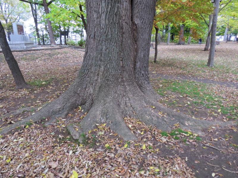巨大な木の根もと