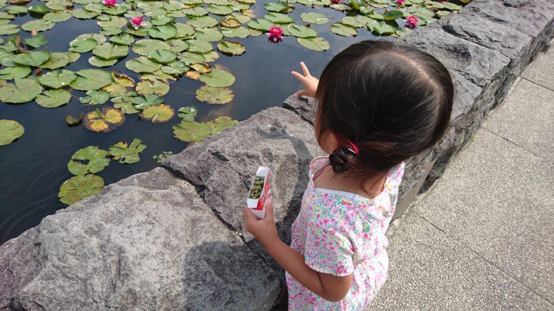 北海道子どもの国鑑賞池