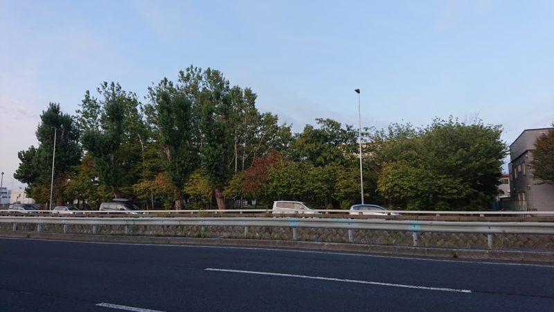 創成川通沿の北光緑地