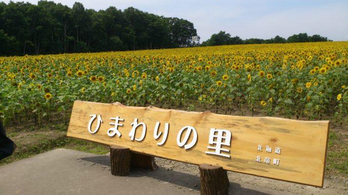 北竜町ひまわりの里(北海道北竜町板谷)