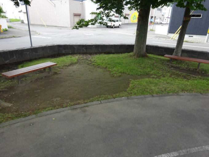 木の下にあるベンチ
