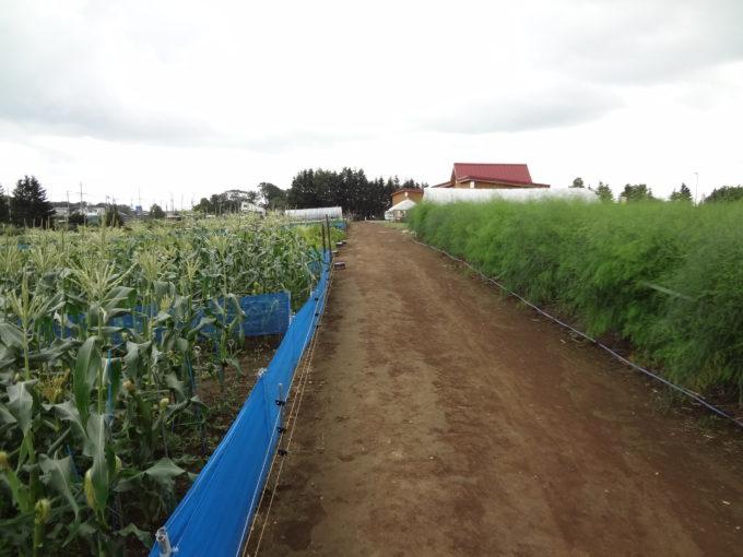 くるるの杜体験農場