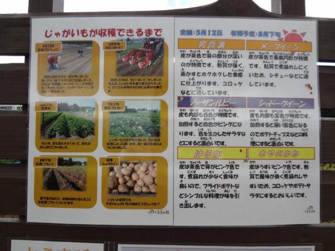 じゃがいもの定植から培土、生育中、開花、枯凋、収穫までの写真