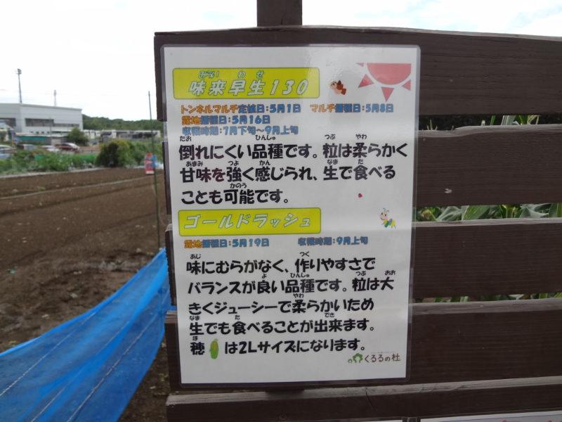 作物の説明や特徴、播種日、収穫予定時期が記載してある看板