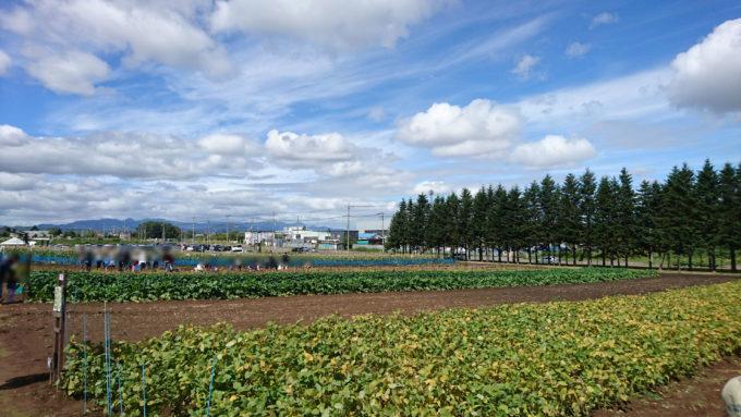 くるるの杜畑の収穫祭