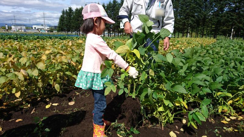 枝豆(ユキホマレ)