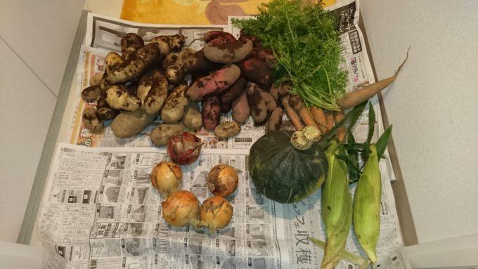 持ち帰り用にいただいた野菜の数々