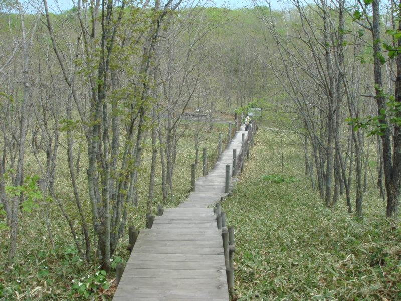 つり橋への階段