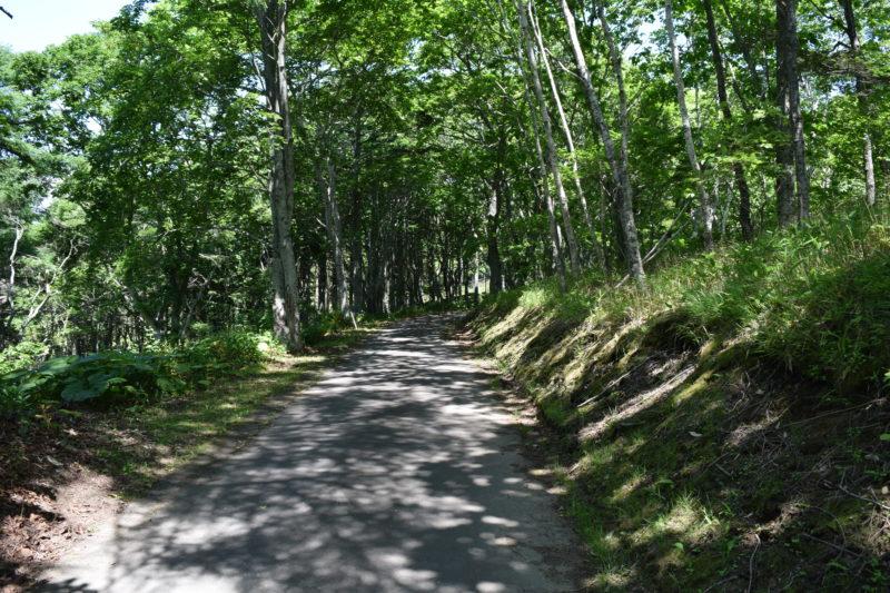 森林に囲まれた一車線