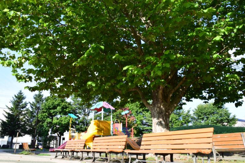 苗穂グリーン公園は木々が多い