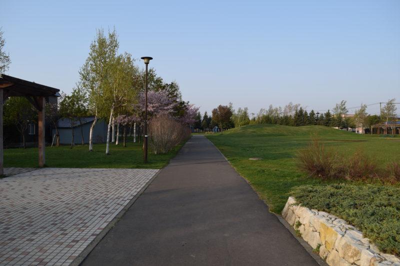 遊歩道沿いに桜も